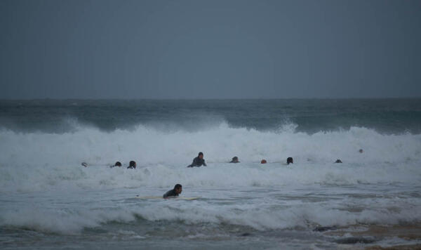 Great White shark drives surfers from the lineup at J-Bay.